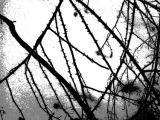 thorn_snow_sm